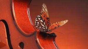 butterfly-landing-on-a-violin_1366x768_75927